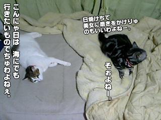 356_2.jpg
