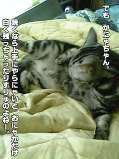 356_3.jpg