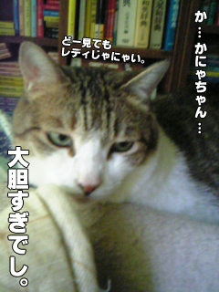 356_6.jpg