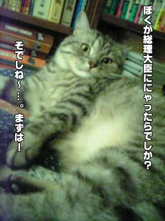 358_5.jpg