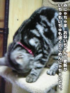 361_1.jpg