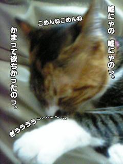 362_6.jpg