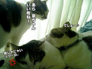 365_4.jpg