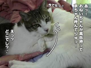 366_6.jpg