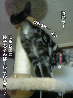 369_3.jpg