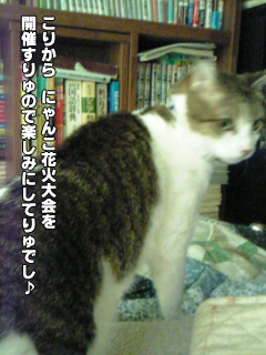 370_02.jpg