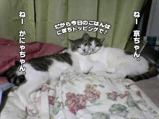 371_6.jpg
