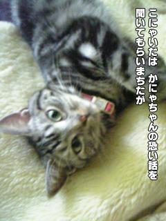 377_1.jpg