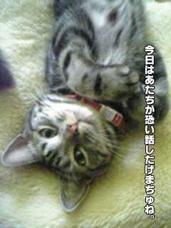 377_2.jpg