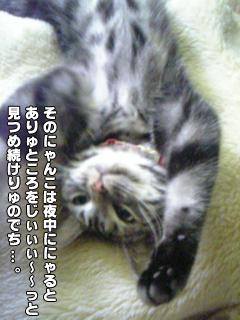 377_5.jpg