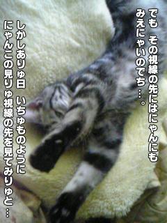 377_6.jpg