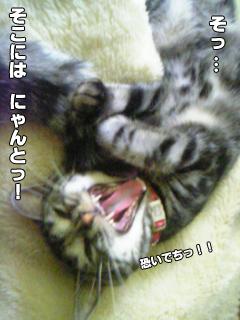377_7.jpg