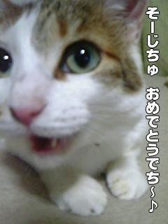 382_2.jpg