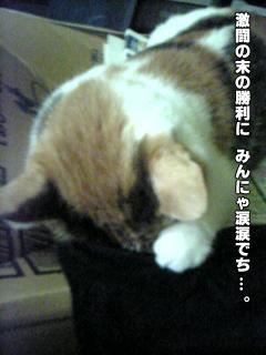 382_3.jpg