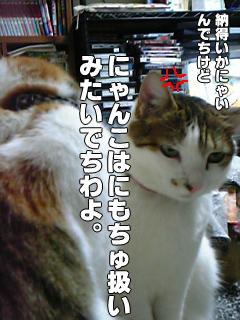 386_3.jpg