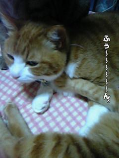 387_3.jpg