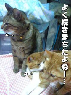 387_6.jpg