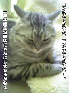 388_2.jpg