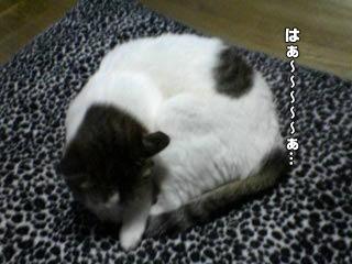 389_2.jpg