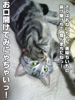 390_5.jpg