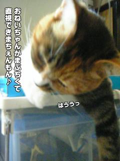 397_4.jpg
