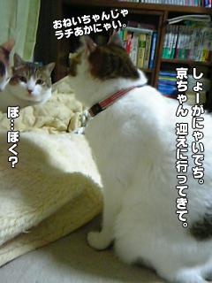 404_4.jpg