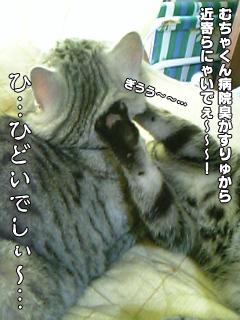 406_6.jpg