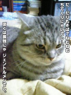 406_7.jpg