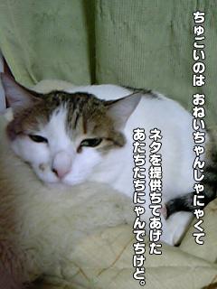 409_5.jpg