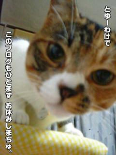 411_2.jpg