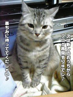 411_4.jpg