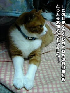 411_5.jpg