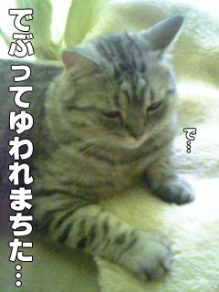 415_3.jpg
