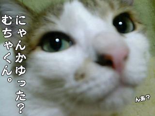 419_4.jpg