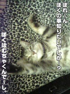 41_1.jpg