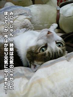 421_1.jpg