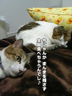 421_2.jpg