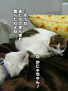 421_3.jpg