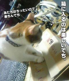 43_1.jpg