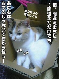 43_5.jpg