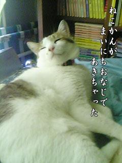 55_4.jpg
