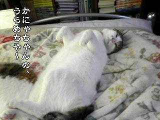 75_5.jpg