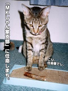 76_6.jpg