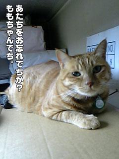 81_1.jpg