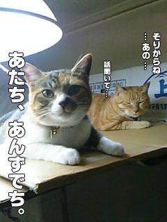 81_3.jpg