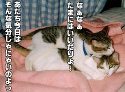 82_1.jpg