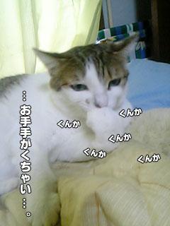 86_4.jpg
