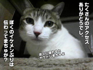 96_1.jpg