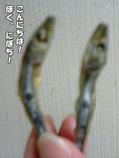 99_1.jpg