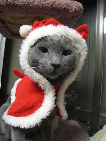 クリスマスー2